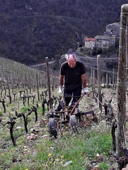 dur labeur dans les vignes